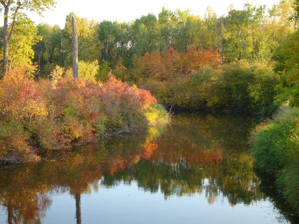 Fir River in the fall