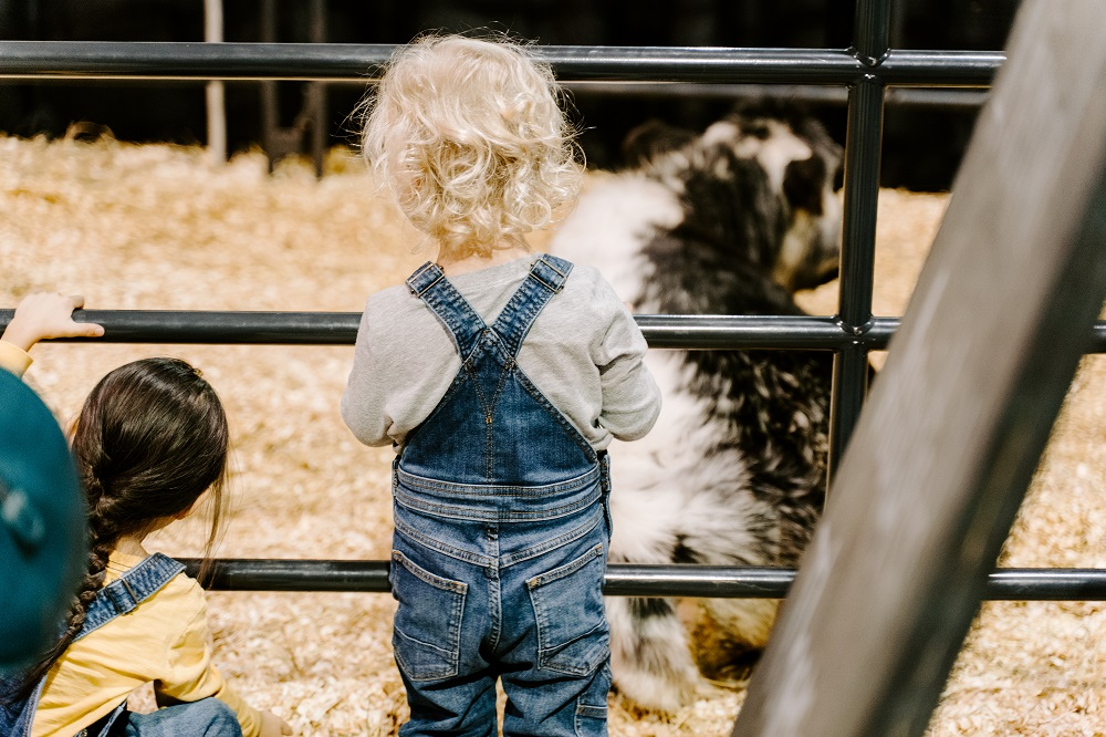 Regina - Annual events include Canadian Western Agribition, Canada's largest livestock show