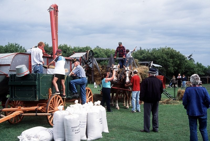 Everyone pitches in at our Threshing Day Special Event